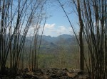 The Bamboo Forest Near Hellfire Place